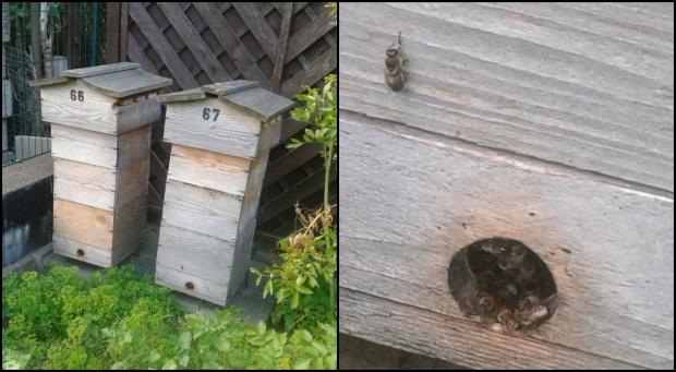 collage Bienen